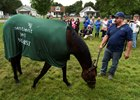 Nyquist Greets Public After Derby