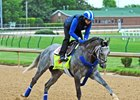 Mohaymen Drills Bullet Ahead of Travers Bid