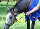 Mohaymen Back to Work in New York