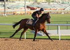 Rich Tapestry's Korea Sprint Start in Doubt