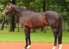 First Son of Deep Impact to Indiana