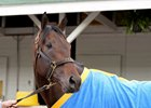 Laoban Breezes at Keeneland for Preakness