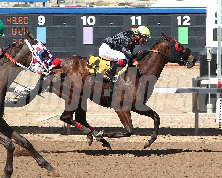 Redneck Humor wins Bill Thomas Memorial Stakes March 20, 2016 at Sunland Park