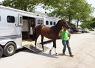 Exaggerator Arrives at Belmont Park