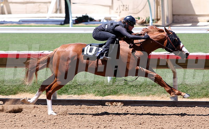 Barretts 2016 May 2yos in Training
