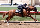 Hansen, Speightstown Progeny Fast at Barretts