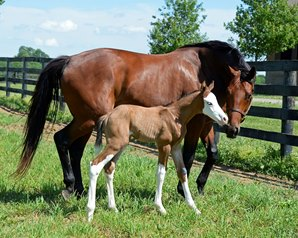 Exclusive Contest: Name the White-Headed Foal