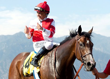 Songbird Heading East For Summer Campaign Bloodhorse Com