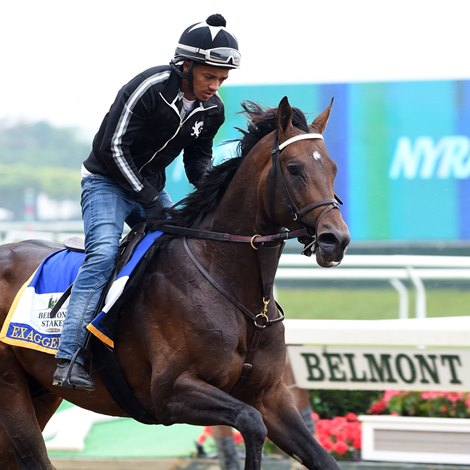Exaggerator Gallops Belmont Field Grows Bloodhorse Com