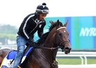 Exaggerator Gallops; Belmont Field Grows