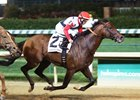 Grade 1 Winner Bradester to Stud at Valor Farm