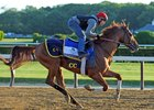 Governor Malibu Probable for Jim Dandy