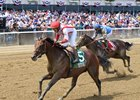 Economic Model, Lewis Bay head Belmont Races