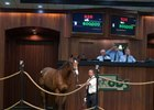 City Zip Colt New OBS June Record at $800,000