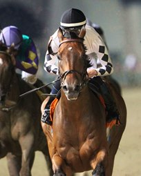 Millionaire, Graded Stakes Winner Alsvid Retired