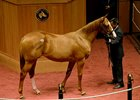 Curlin Colt Lights Up F-T Bid Board