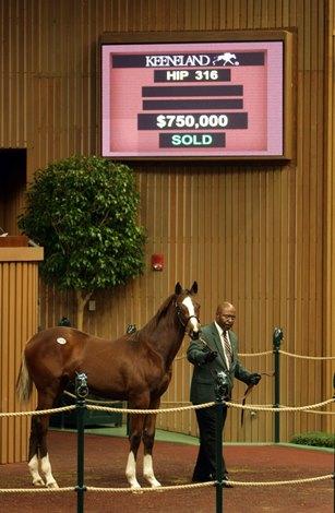 Bloodhorse Sale