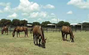 Lane's End Texas Closes, Stallions Relocate