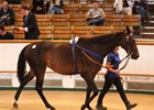 Record-Breaking Start to Tattersalls July