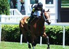 Sweet Acclaim Favored in Ellis Park Turf