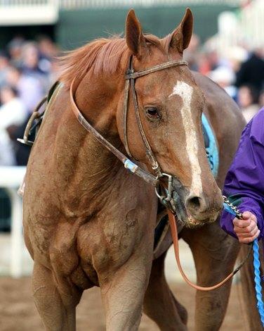 Beholder Stellar Wind Renew Rivalry Bloodhorse Com