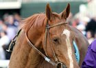 Beholder, Stellar Wind Renew Rivalry