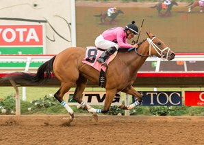 Belvoir Bay Makes the Grade in Torrey Pines