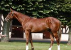 Shadwell, Zayats Land Frankel Colts at Arqana