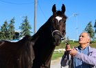 A Woodbine Mile Shot with a Former Claimer