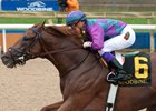 Amis Gizmo Rebounds for Ontario Derby score