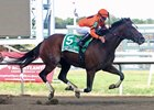 Noholdingback Bear in Gallant Bob Stakes