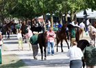 Keeneland Ready for September Sale, Events