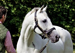 Leading French Sire Linamix Dies at 29