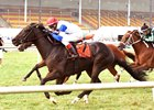 Blacktype Wins Record Commonwealth Turf Cup