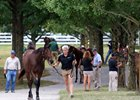 Can Keeneland Buck the Sales Trend?