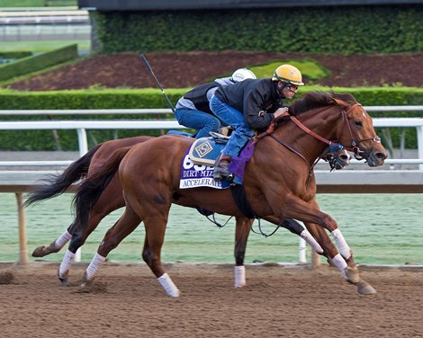 Accelerate On Fast Track For Dirt Mile Bloodhorse Com