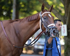 Curalina, Syndergaard Breeze at Belmont