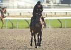 Euros Land for Woodbine's International Card