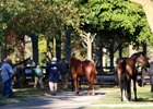 Slight Dip in North American Yearling Sales
