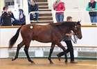 Dubawi Continues Reign at Tattersalls October