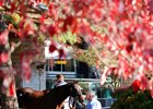 Keeneland Sale on Nearly Even Terms