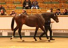 Frankel Colt Tops Tattersalls Yearling Sale