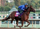 Victory to Victory Out of Breeders' Cup