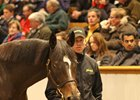 Tattersalls December Ends on Quiet Note
