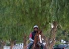 California Chrome and Gladney's Amazing Ride