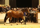 Godolphin Draft in Demand at Tattersalls