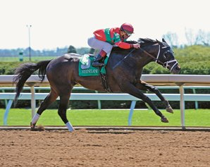 Four-Time Graded Winner Protonico Retired