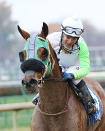 Lady Fog Horn Named Indiana-Bred Horse of the Year