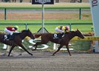 Japanese Runners Vie for Kentucky Derby Spot