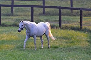 Tapit Breaks Single-Season Earnings Mark